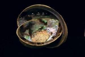 Paua Abalone Shell - Marta Howell Story